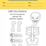 human anatomy worksheets 3