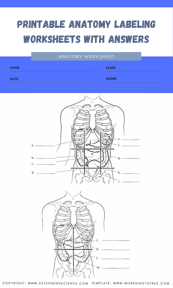 printable anatomy labeling worksheets with answers 4