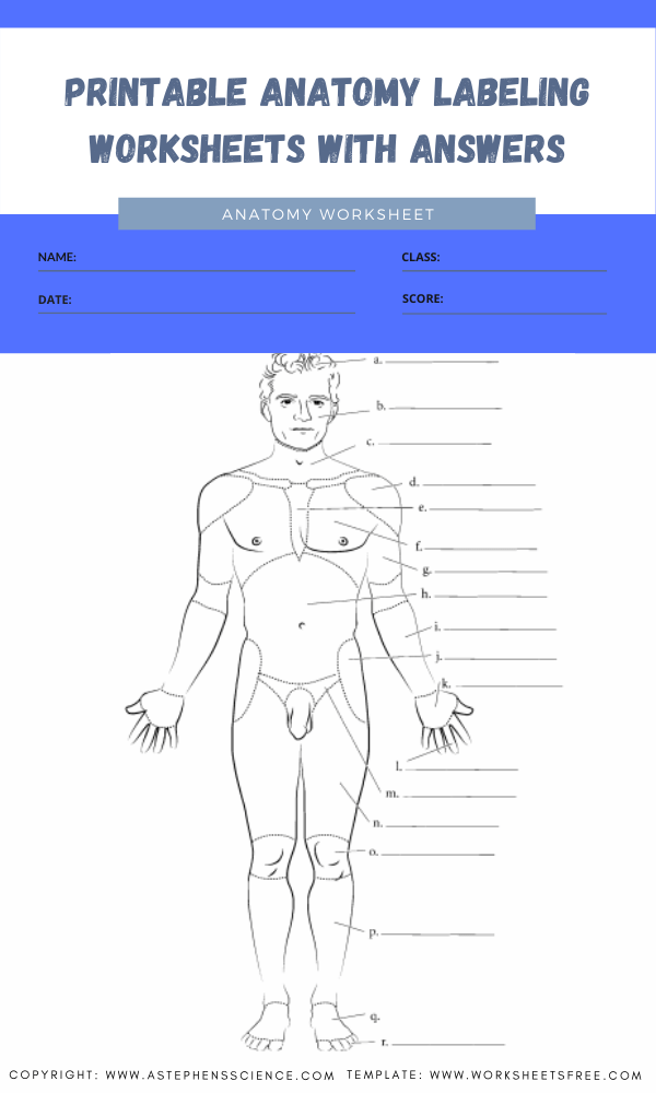 printable anatomy labeling worksheets with answers 8