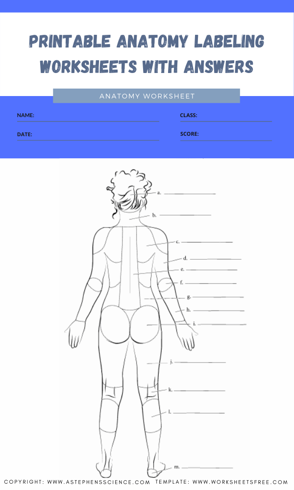 printable anatomy labeling worksheets with answers 9