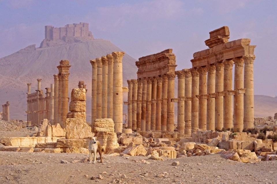 3-Dominic Burdon-Palmyra Syria-lo