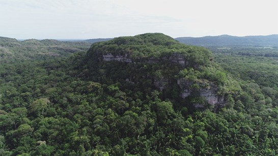 A large outcrop of rock covered with trees in the Amazon rainforest