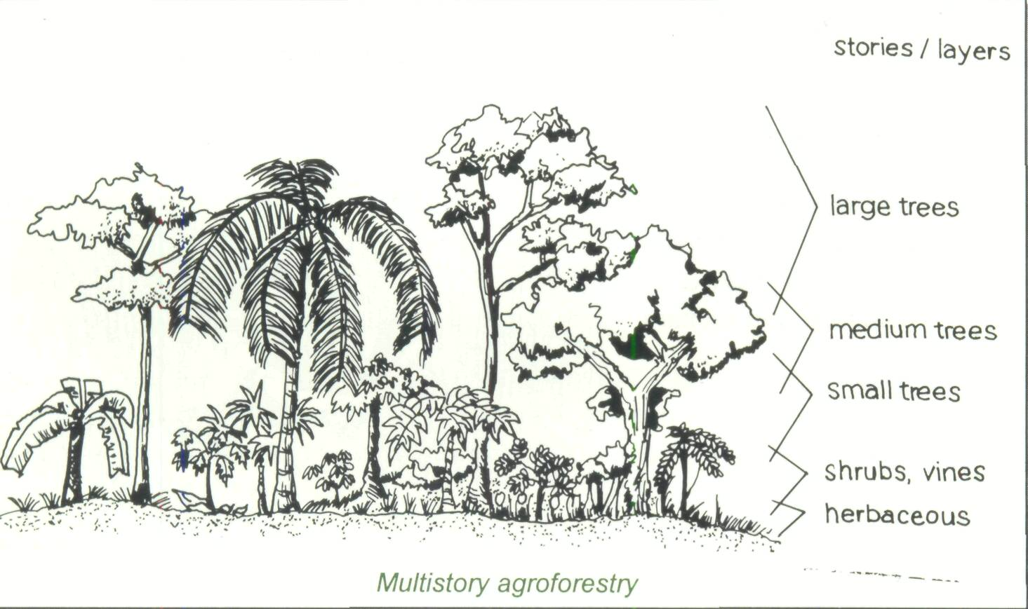 4 8 Multistory Agroforestry