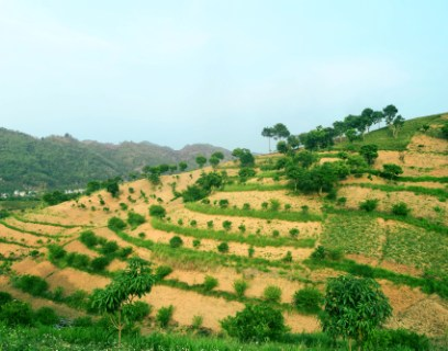 farm management draws on agricultural economics for information on prices, markets, agricultural policy, and economic institutions such as leasing and credit. What Is Agroforestry World Agroforestry Transforming Lives And Landscapes With Trees