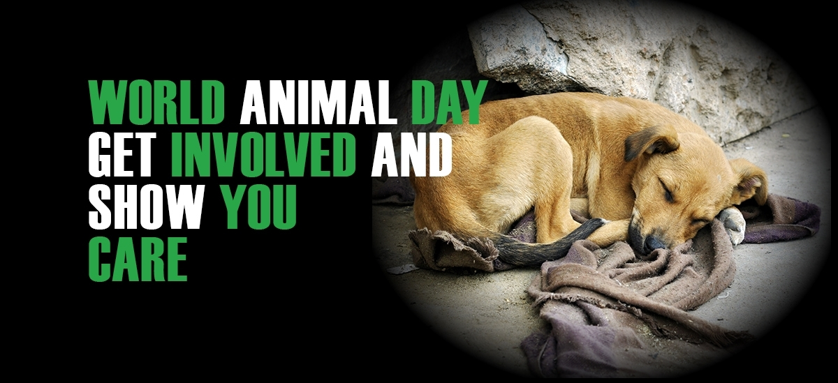 Image result for Images for the World Animal day 2016.