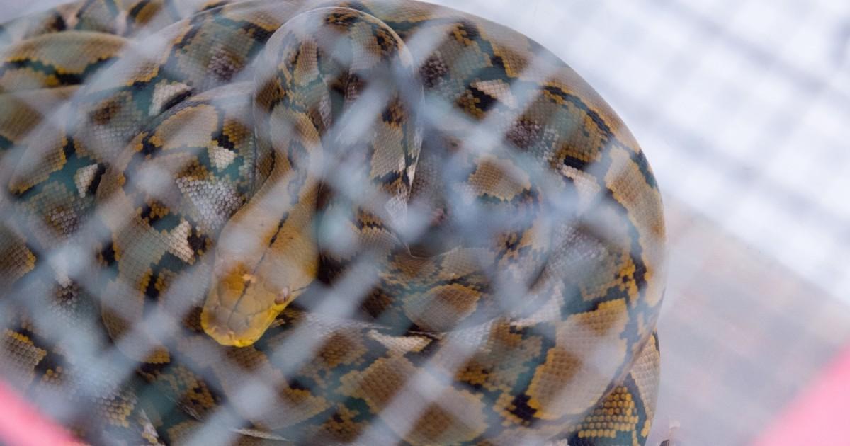 Breaking news: China bans wildlife trade due to coronavirus ...
