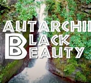 Autarchii - Black Beauty Movie