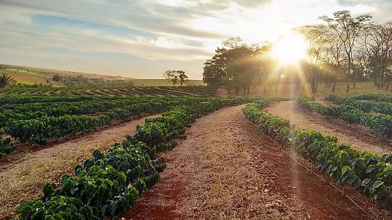 All about the Coffee Industry  WorldAtlascom