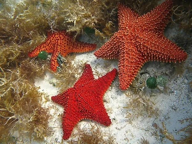 starfish animals of the