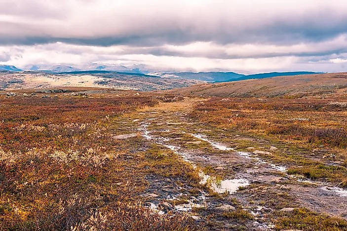 What Is A Moorland