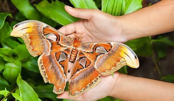 # 3 mariposa atlas
