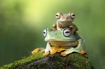 What Are Amphibians WorldAtlascom