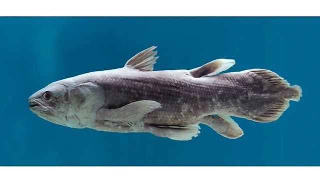 #6 Coelacanath – 360 million years old