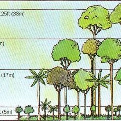 Forest Canopy Diagram Ford Ka Wiring Diagrams Layers Stories And Stratification Worldatlas Com