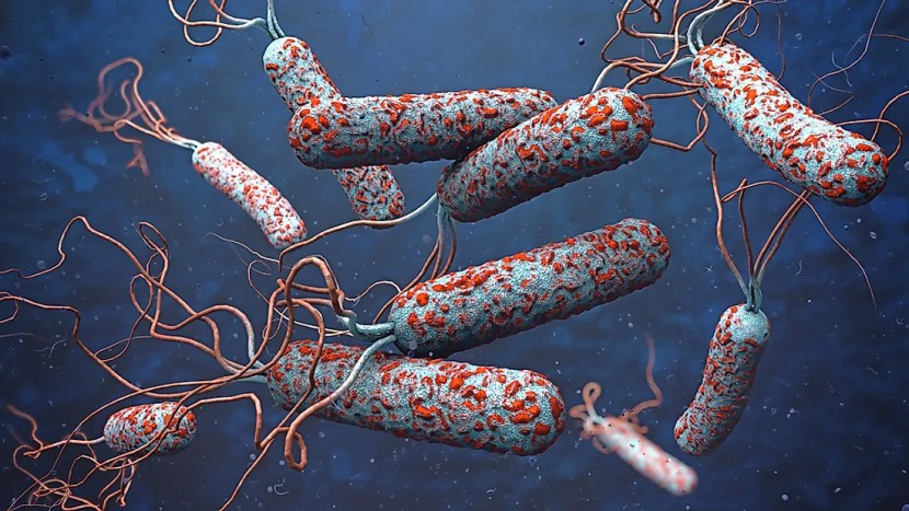 patógenos da cólera