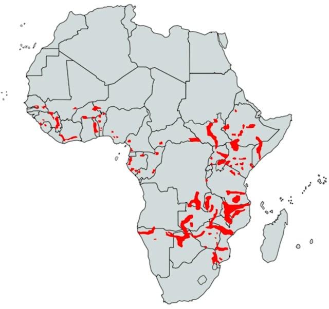 Where do Hippos Live