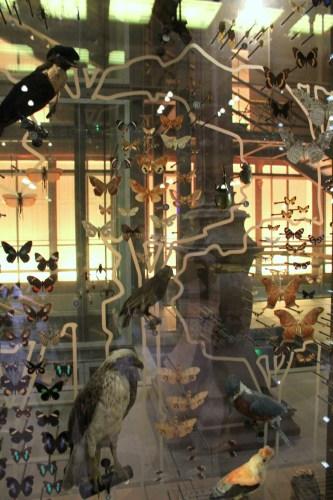 Zwierzęta w Muzeum Historii Naturalnej