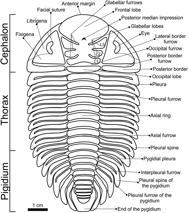 WFS News: Trilobite ancestral range in the southern