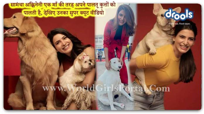 Samantha Akkineni Animal Love: She maintains her pet dogs like a mother, watch her super cute video - South Indian Most Cutest Actress News