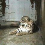 melaka-zoo-night-safari-06