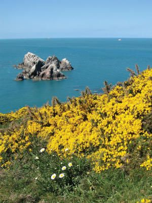 Flowers lush on Alderney.