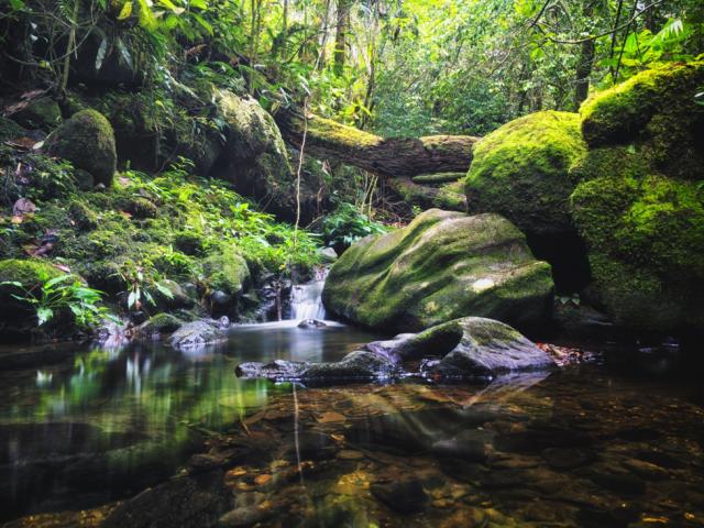 All things fresh and rare at Kota Kinabalu, Sabah