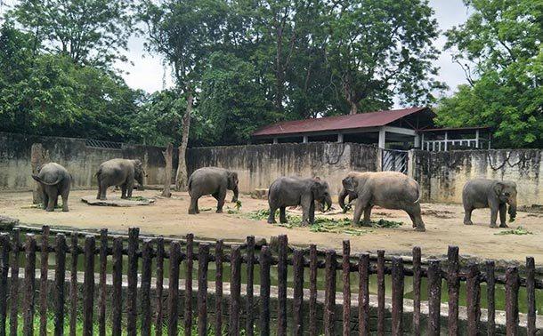 Zoo Taiping Image