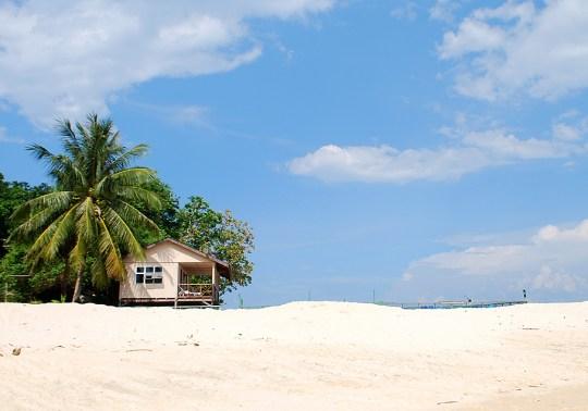 turtle-volunteering-talang-island