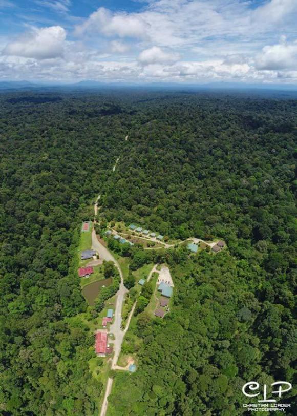 Deramakot Forest Reserve Sandakan