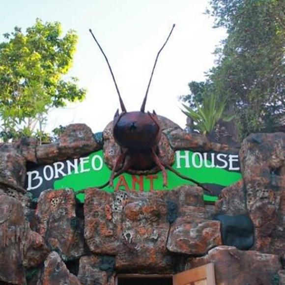 Borneo Ant House Kota Kinabalu