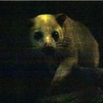 melaka-zoo-night-safari-07