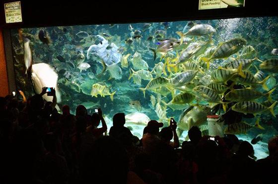 kids-travels-klcc-aquarium