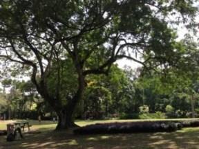 romance-park2