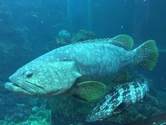 Borneo Marine Research Institute Marine Museum Kota Kinabalu Image
