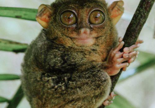 Bizarre wildlife found in the jungles of exotic Borneo