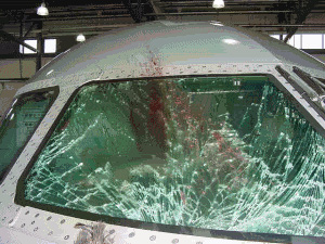 Bird Strike!