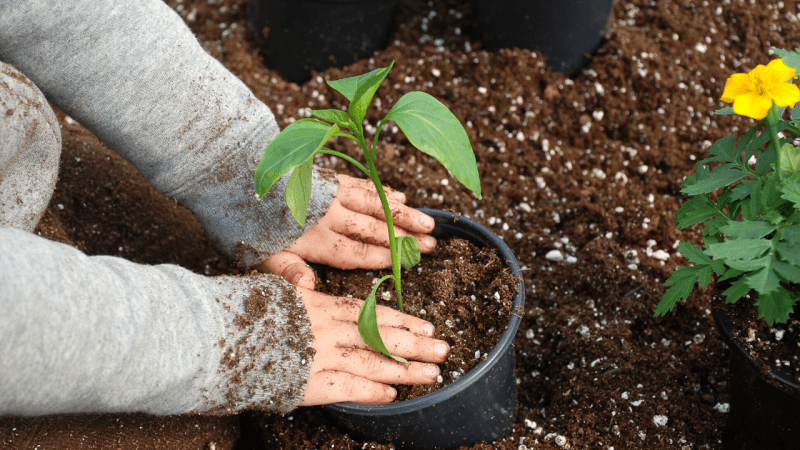 Gardening With Kids - 6 Veggies Kids Can Easily Grow
