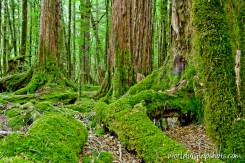 Rainforest in Fiordland