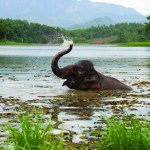 TRAVELLING TO LAOS: THE ELEPHANT CONSERVATION CENTER
