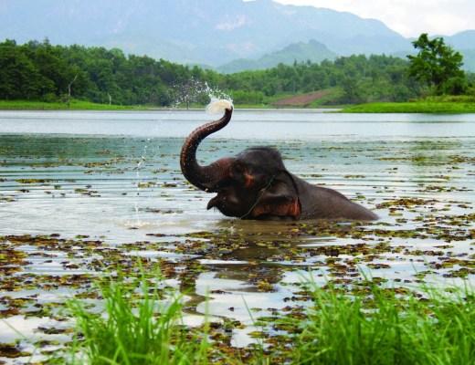 elephantconservationcenter