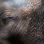 ANIMALS: LA COLECCIÓN DE FAUNA SALVAJE DEL FOTÓGRAFO TOMMY SALAS
