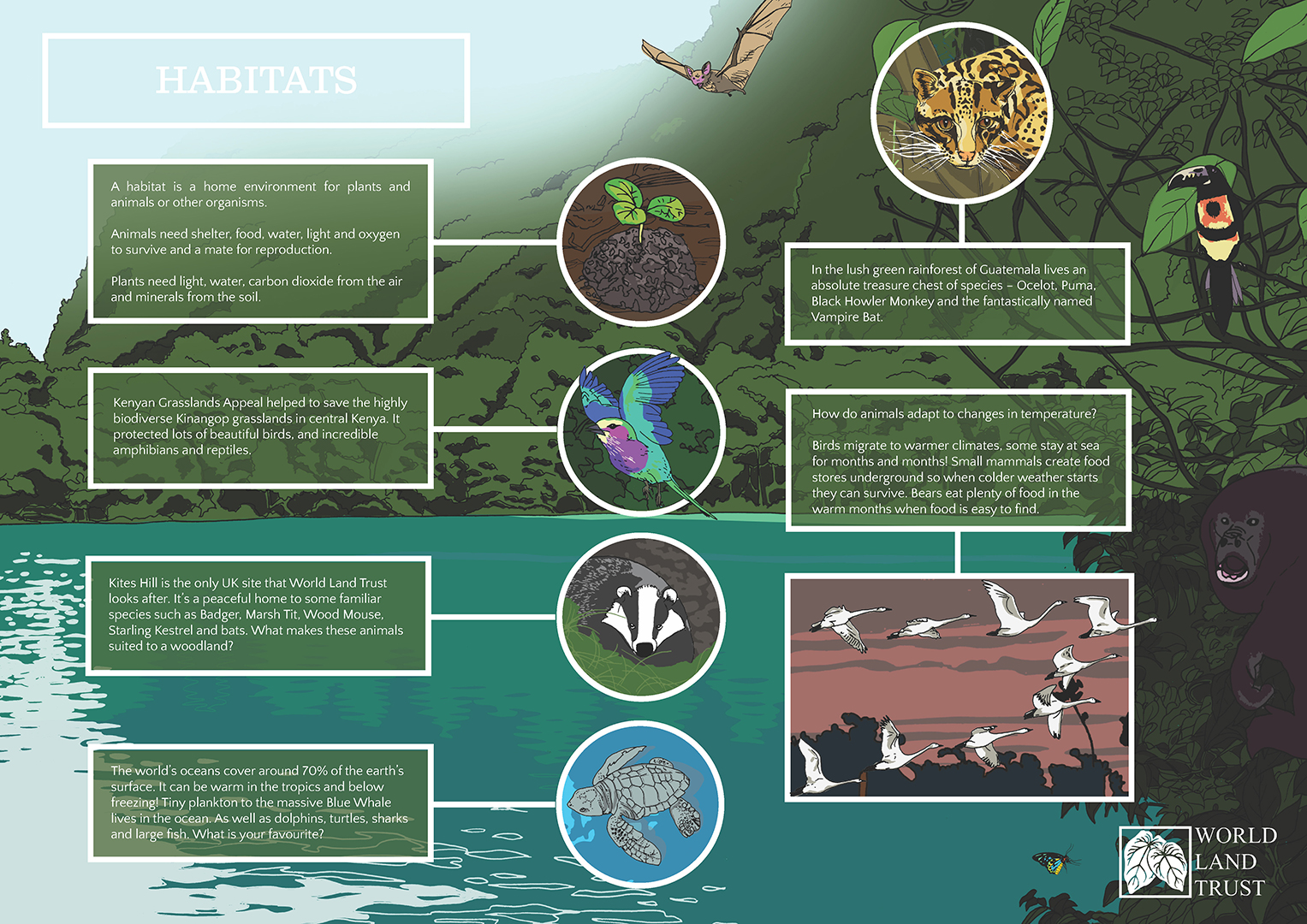 Conservation Materials For Schools Free Rainforest