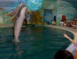 List of Major Aquariums and Dolphinariums in Dubai