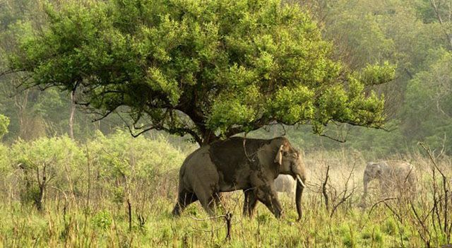 10 Best Adventure Experiences at the Wildlife Sanctuaries in India