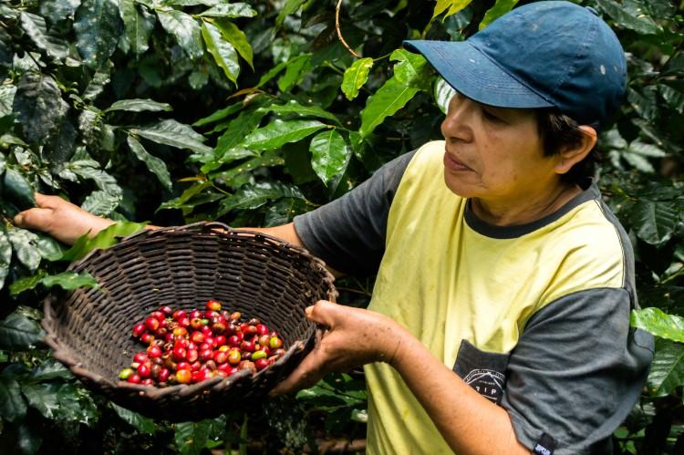 coffee tour Peru