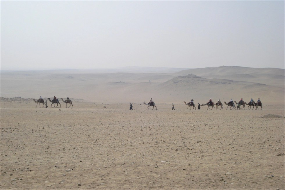 Several camels walking along the plateau at the Egypt pyramids