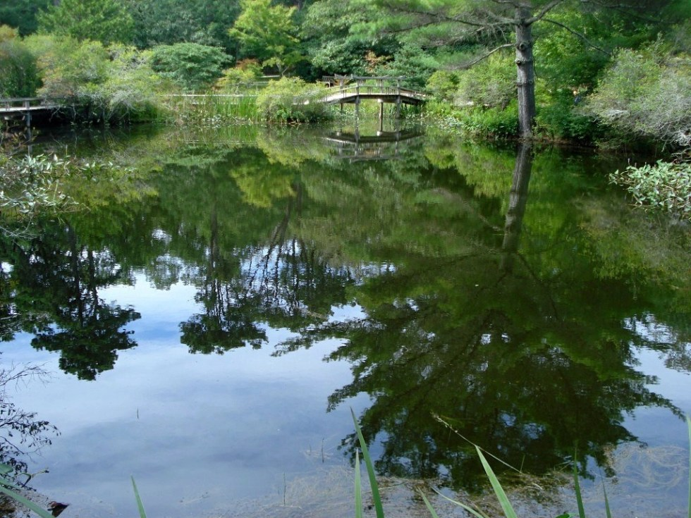 Trees reflected in a pond in the Mytoi Gardens on Chappaquiddick Island, Massachusetts