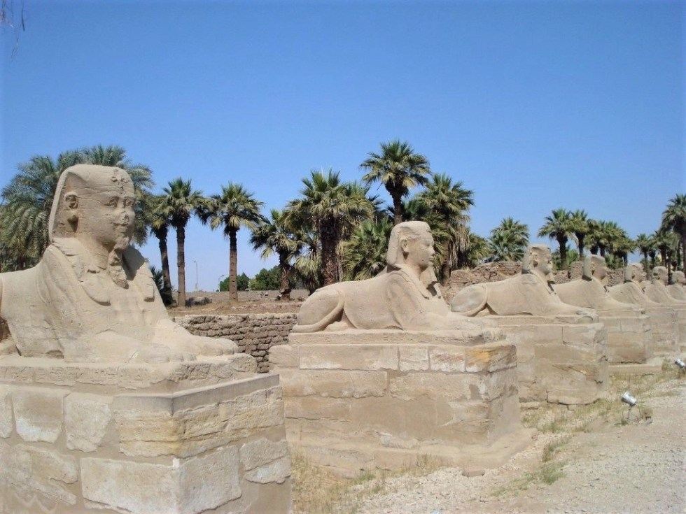 Sphinxes lining a road with palm trees in the background is the Avenue of the Sphinxes in Luxor, Egypt