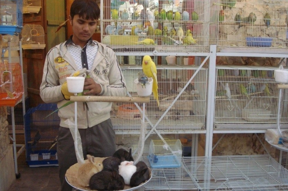 Man standing with birds and rabbits in Souq Waqif in Doha, Qatar