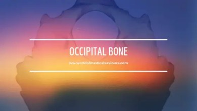 Photo of The Occipital bone